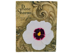 4pk rose of sharon 870004